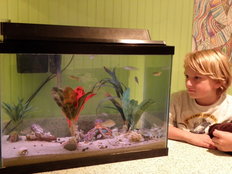 Salt tank continues beach boy 39 s aquarium training for Octopus fish tank