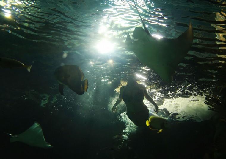 A Real Mermaid 39 S Tale At The Virginia Aquarium