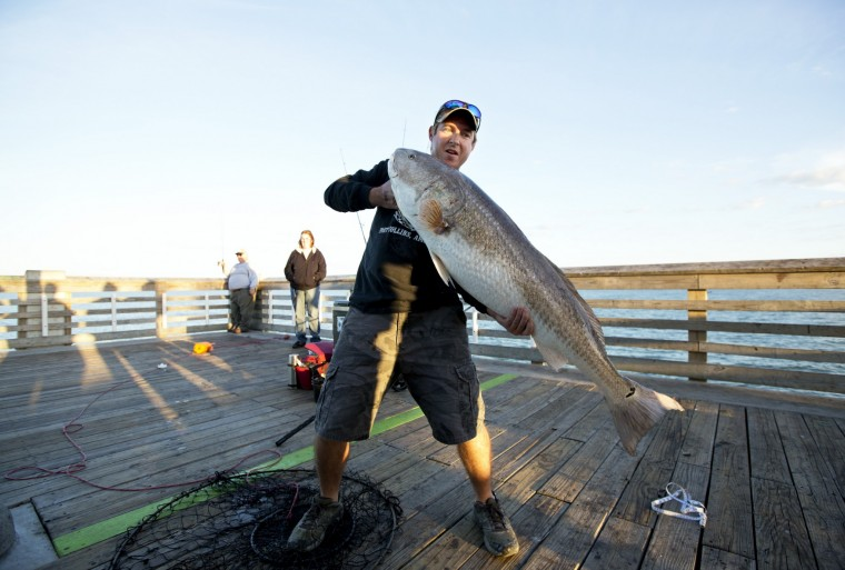 Epic run of red drum lures anglers from miles around for Surf fishing virginia beach