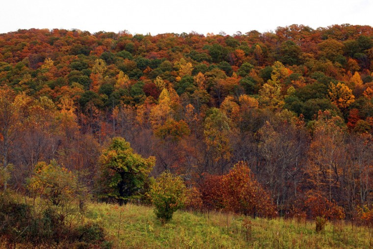Amazing ... Garden Ridge Chesapeake Virginia By For Some Gas Pipeline Through Va  Carries Concerns ...