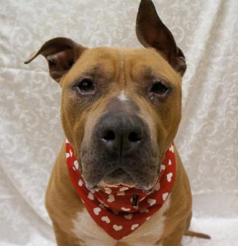 Dog Adoption Hampton Roads