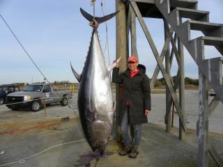 Connecticut angler lands giant bluefin tuna hamptonroads for Oregon inlet fishing center camera
