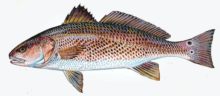 Fishing Forecast Oct 24 30