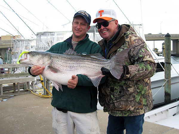 Never a bass this big says coastal convert bill dance for Bill dance fishing