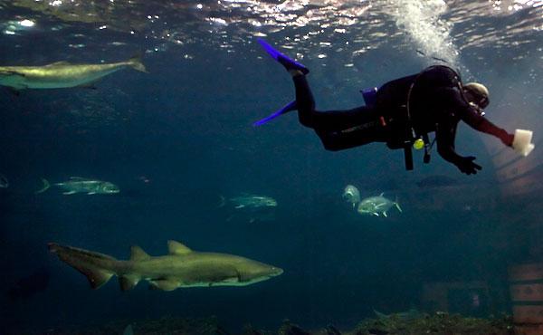 N C Aquarium Now With More Teeth