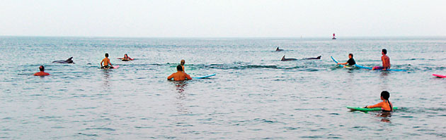 Dolphins at Virginia Beach