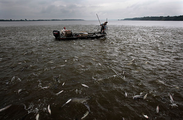The Rise And Gall Of Blue Catfish In Virginia Rivers