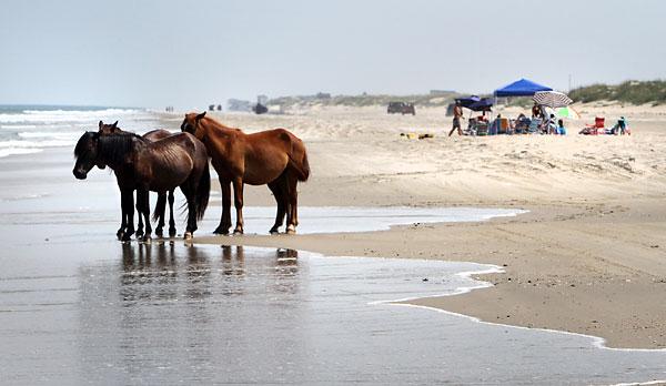 Tidewater - Wild Horse Plains