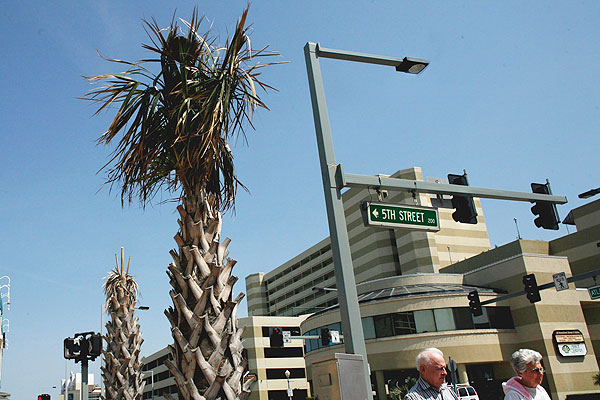 Palm Trees Virginia Beach S Sentinels Of Summer Shed