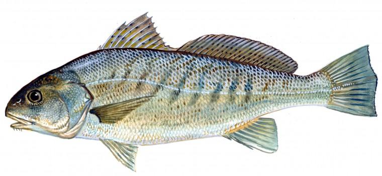Fishing Forecast April 17 23