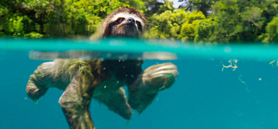 Planet Earth  First Island With Sloth