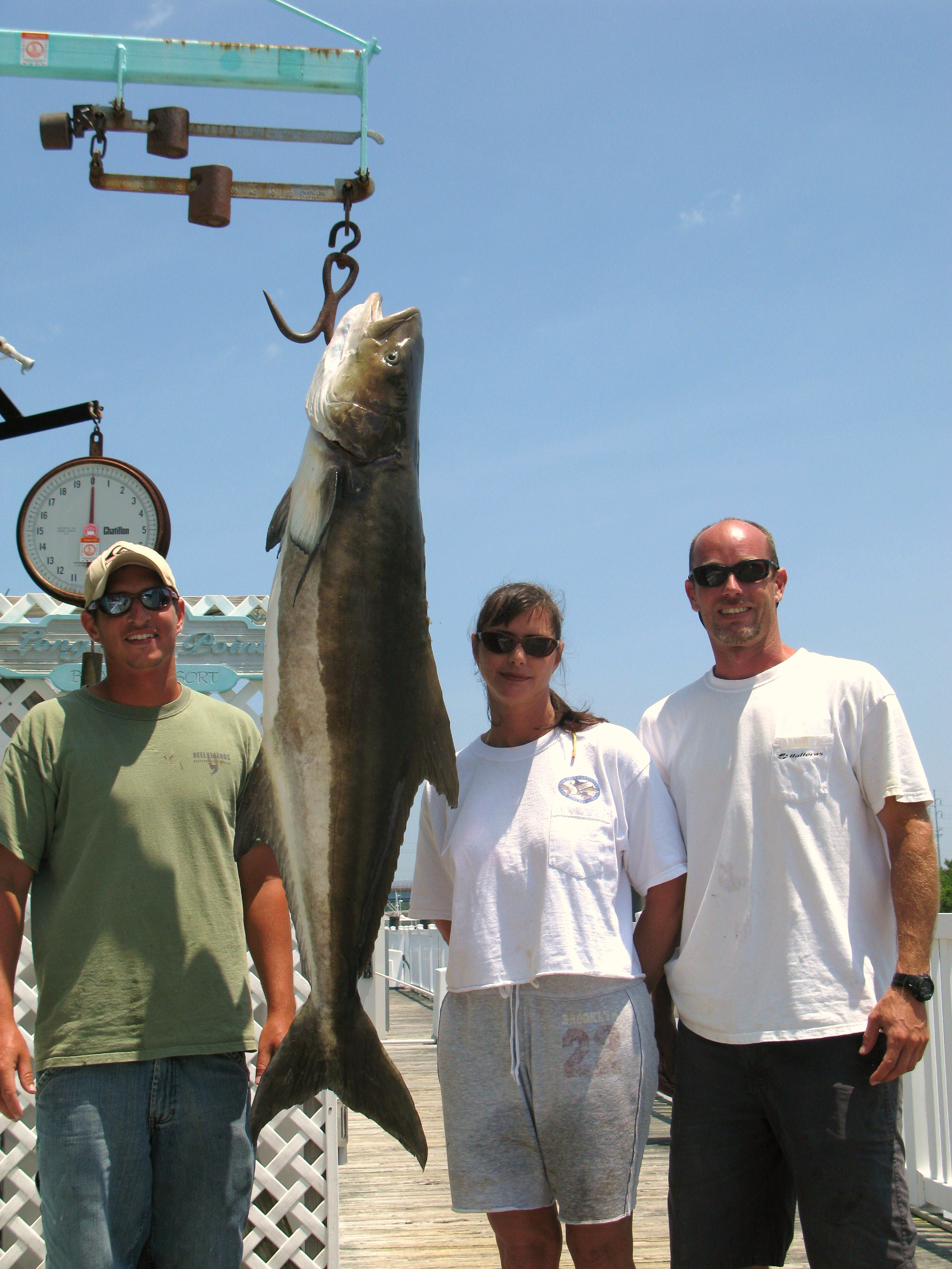 Pending world record cobia boated this weekend for Hampton roads fishing report