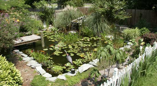 Diy a backyard pond where fish can spread their fins for Diy backyard pond